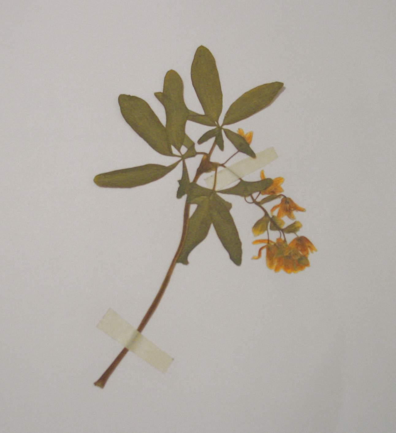 Охраняемые растения одесской области